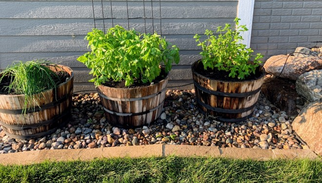 Setting Up an Automatic Watering System for Outdoor Plants & Hanging Baskets in whiskey barrels.