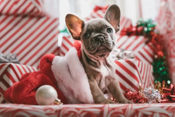 How To Give Your Dog A Very Happy Christmas