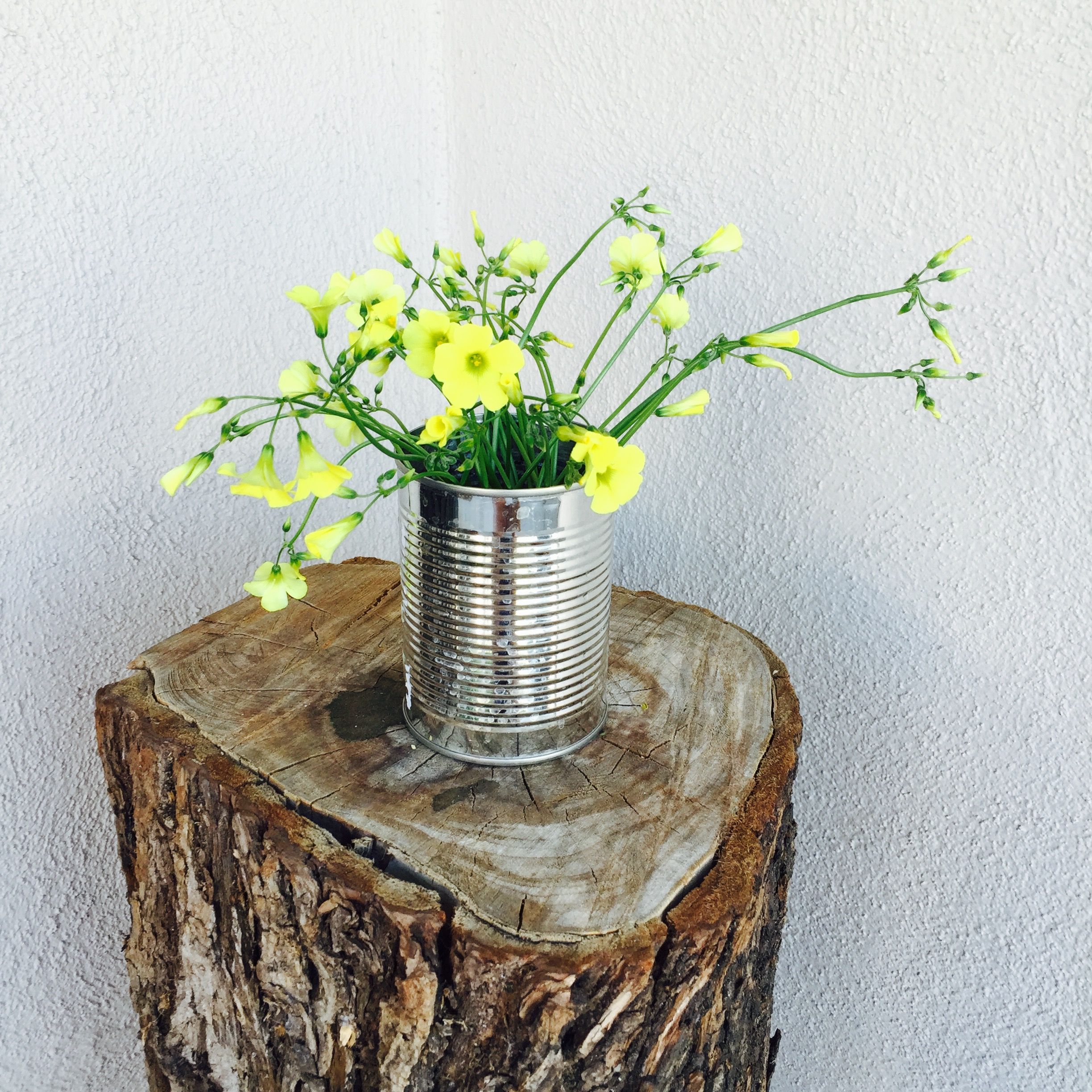 Image result for tin can with flowers