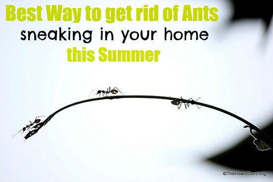 Best Way to Get Rid of Ants: Wife Edition by The How-To Guru