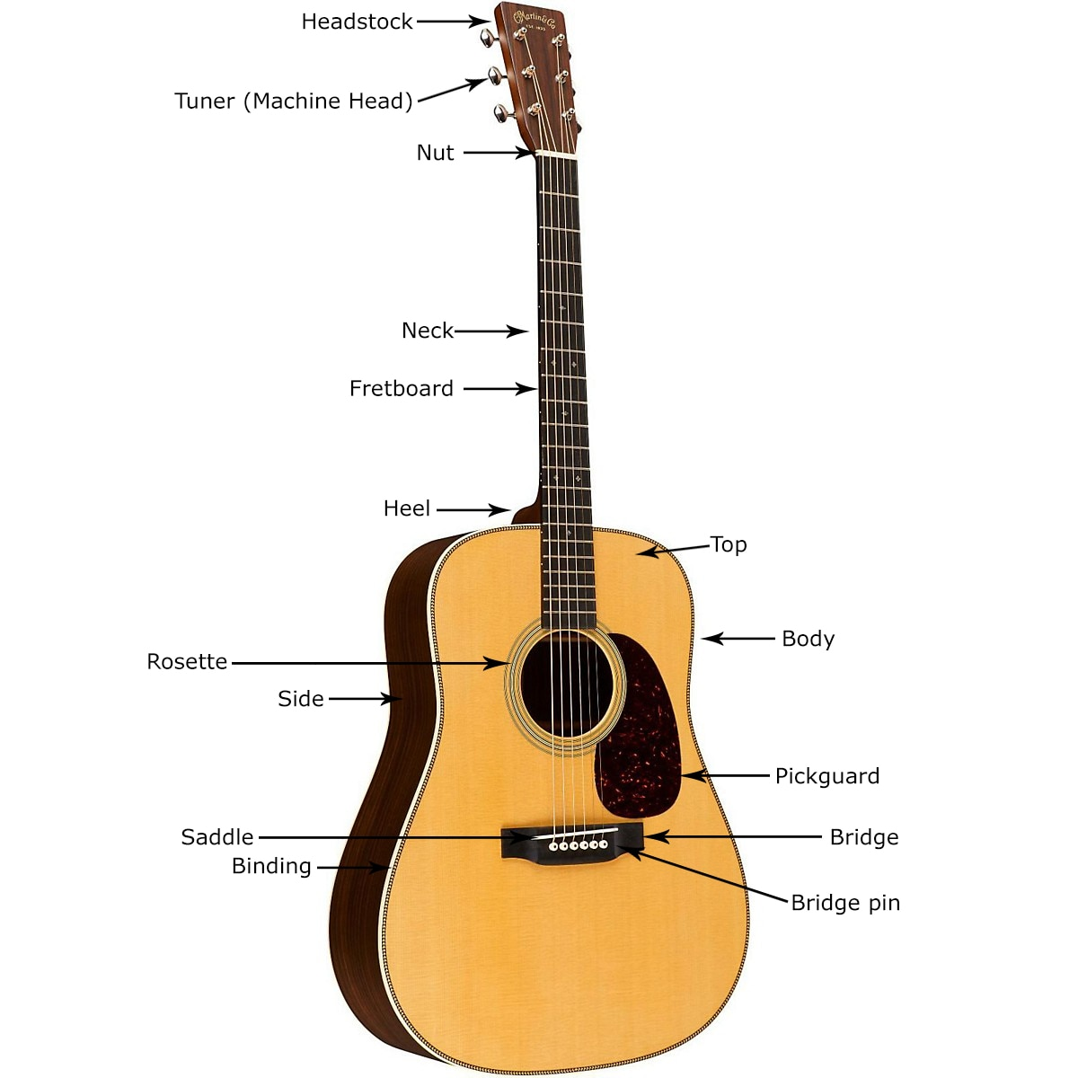 hight resolution of acoustic guitar anatomy and parts