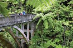 The bridge to nowhere over the Mangapurua Stream in Whanganui National Park.