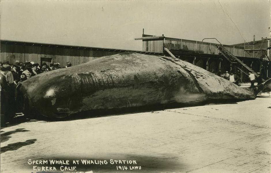 whaling1