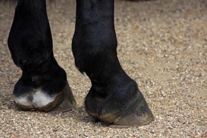 horses-hooves-164940_640