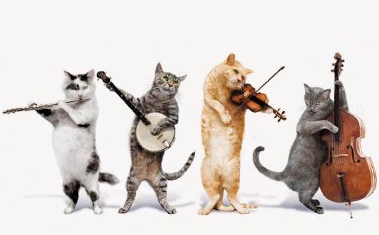 music-cats