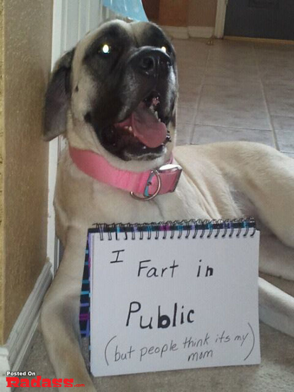 20 Hilarious Pictures Of Public Dog Shaming  The Humorous