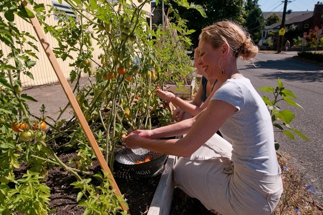 Ericka Tending Tomatoes Outside Volunteer Park Cafe