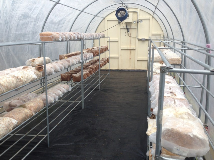 High Tunnel at Provisions Mushroom Farm by Jason Price