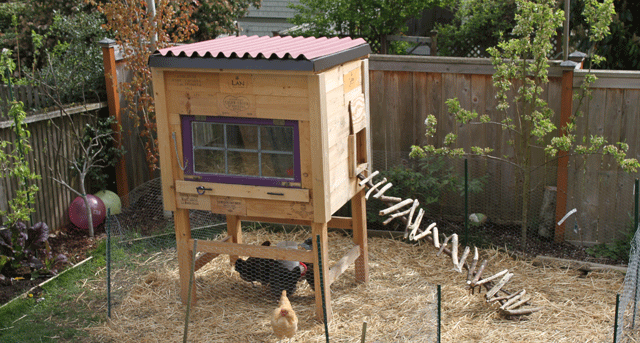 backyard-chicken-coop-jason-price-seattle