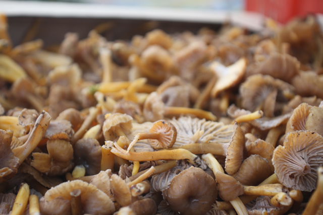 mushrooms-farmers-market-jason-price-seattle