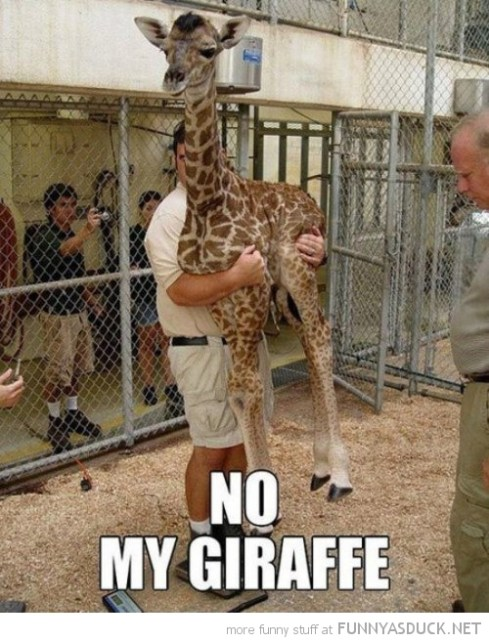 funny-man-holding-giraffe-no-my-mine-pics