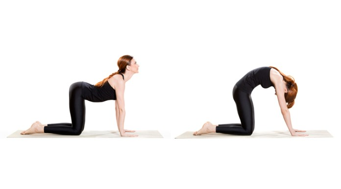 camel cat exercise for back pain relief