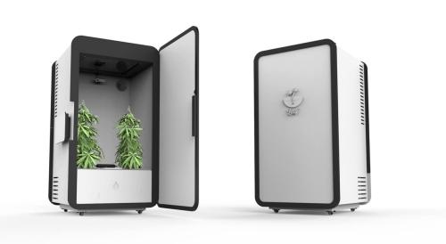 Grow your own Marijuana