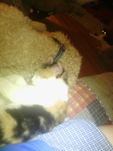 Wanda snuggles with Chewie, who is in great pain.