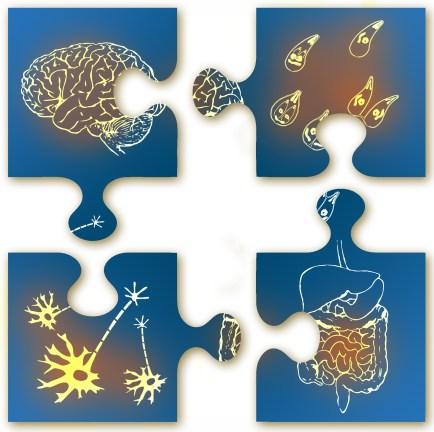 Brain gut connection. Puslespillet for å fikse helsen.