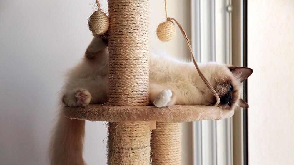 6 best cat trees