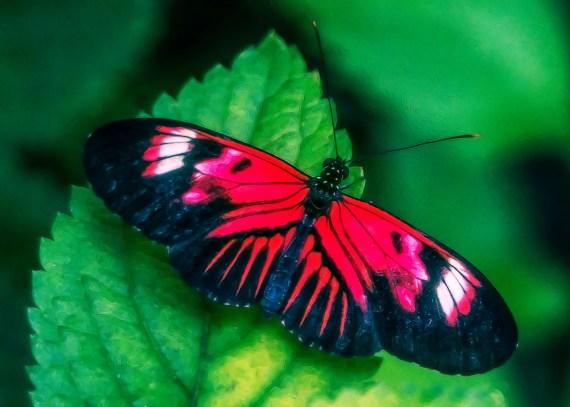 Butterfly World – Butterflies, Birds & Beautiful Flowers in South Florida