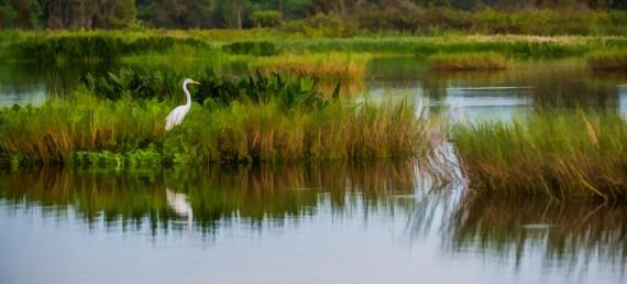 Circle B Bar Reserve – Lakeland FL – A Central Florida Park You Should Not Miss