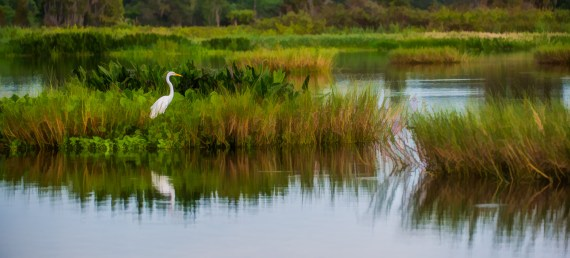Circle B Bar Reserve – Lakeland FL – A Central Florida Park You Should Not Miss