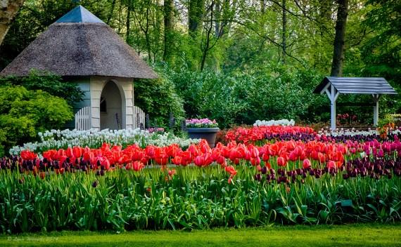 The Netherlands – Keukenhof Gardens – A Whole Lot Farther- Part 1