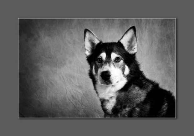 angel_images_husky_swpp_silver_award