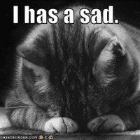 Extremely sad cat wants a hug