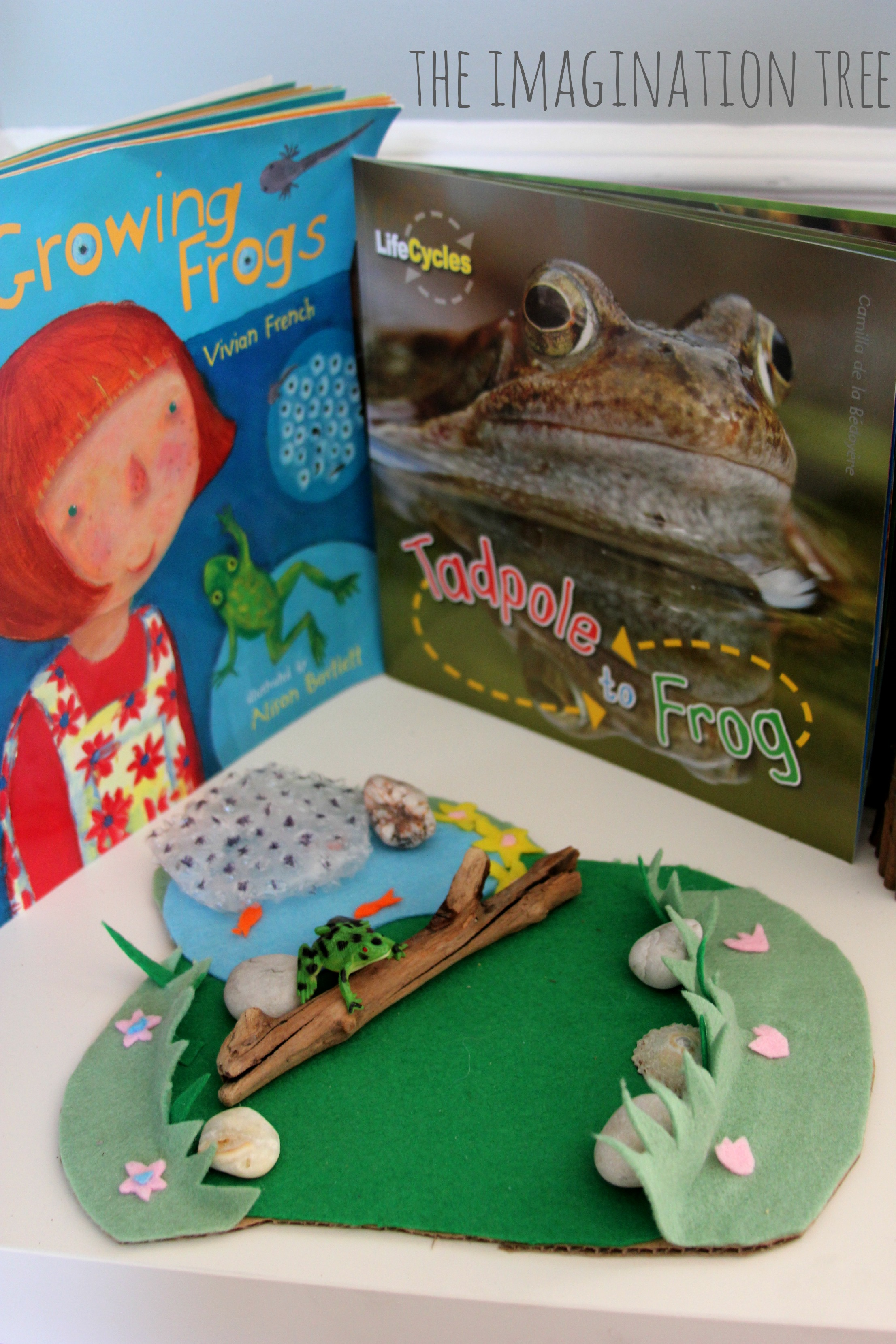Tadpole And Frog Investigation Area