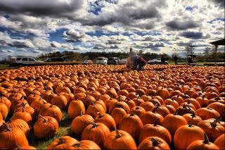 pumpkin humor