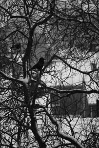 black & white winter 2