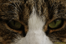 30) Green eyed wonder