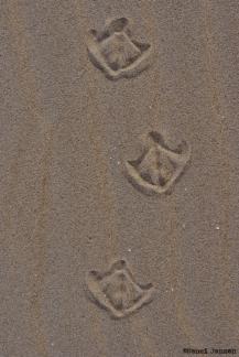 27) Leaving tracks...