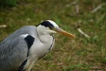 22) Hello Heron:)