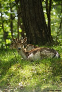 23) Deer spotting