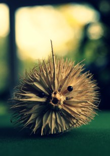 19) Prickly friend