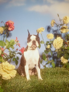 Gucci-year-of-the-dog-collection-the-impression-08