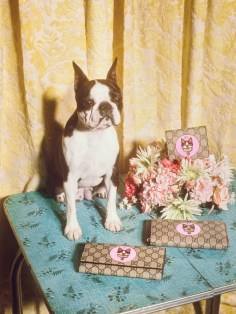 Gucci-year-of-the-dog-collection-the-impression-09