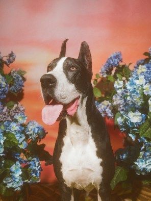 Gucci-year-of-the-dog-collection-the-impression-11