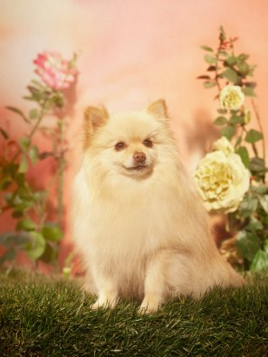 Gucci-year-of-the-dog-collection-the-impression-22