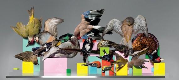 British Birds, 2008