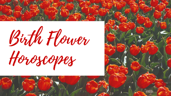 Birth flower horoscope - tulips
