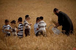 Haredim celebrating Shavuot
