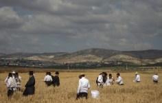 Landscape of Shavuot