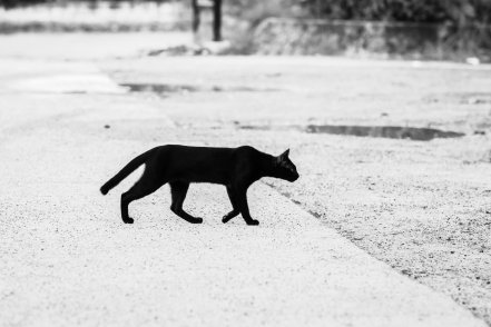 a black cat walking on cemented road