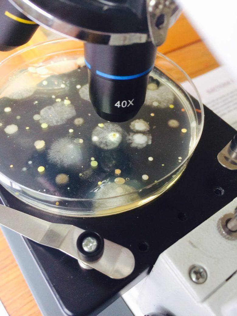 Eww, Bacteria!