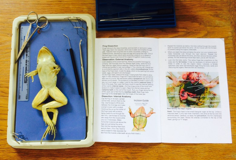 Croaky! A Frog Dissection