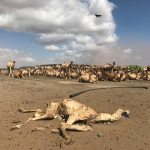 Satellite Images Trigger Payouts For Kenyan Farmers In Grip Of Drought