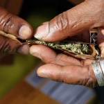 Ghana ranked 3rd in marijuana use in the world but leads in Africa