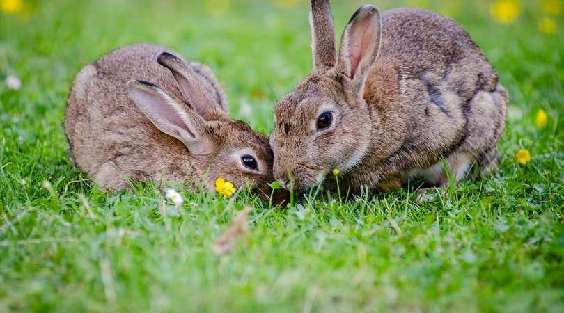Rabbit Farming in Nigeria
