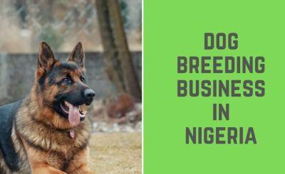 Dog Breeding Business in Nigeria