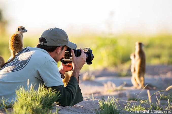 20 Reasons Why being a Wildlife Photographer is best job in the world